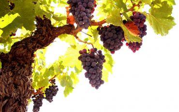 The festivity of wine and bleak 2013